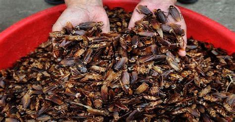 best cockroach best cockroach killer reviews in 2018 pest seize