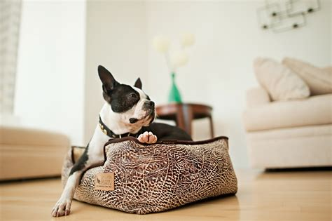 play dog beds p l a y launches new line of designer lounge beds