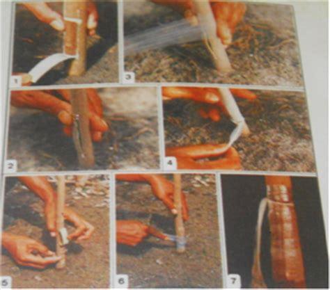Plastik Untuk Okulasi teknik dan cara okulasi mata tunas pada pohon karet