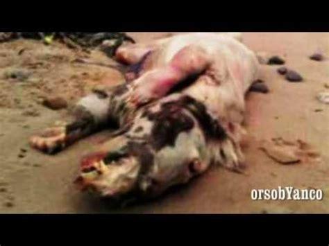 persone con due teste creatura con testa di cavallo e corpo di maiale