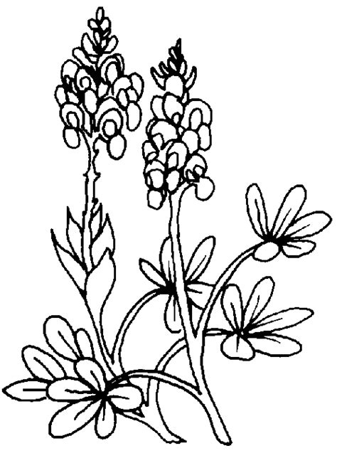 Bluebonnet Flower Coloring Page free bluebonnet flower coloring pages