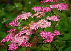 stauden die den ganzen sommer blühen winterresistente str 228 ucher bl 252 ht den ganzen sommer