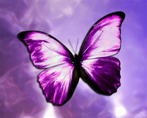 Home Designer Pro 10 0 by Beautiful Purple Butterfly Colors Photo 34605232 Fanpop
