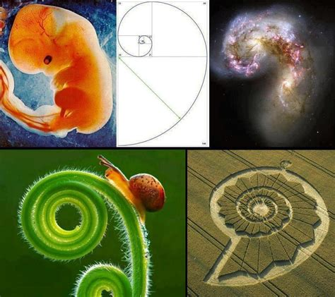 number pattern found in nature understanding the fibonacci sequence and golden ratio