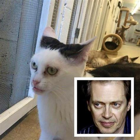 looks like cat looks just like steve buscemi realfunny