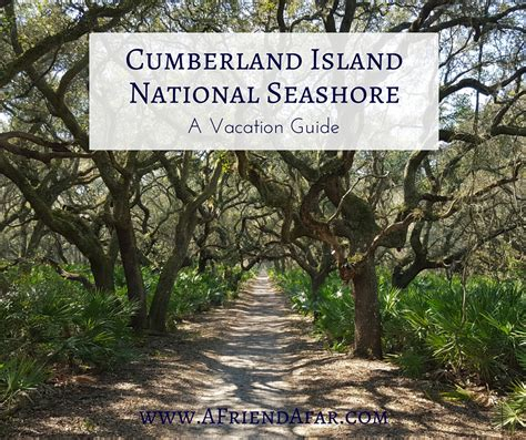 a fan com cumberland island vacation guide a afar