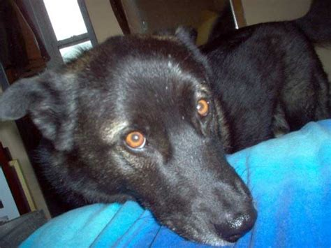 how to crate a with severe separation anxiety i adopted a with severe separation anxiety