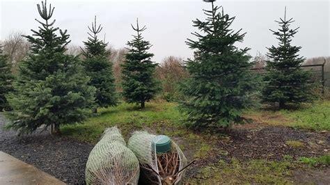 christmas in ballymena slemish market garden