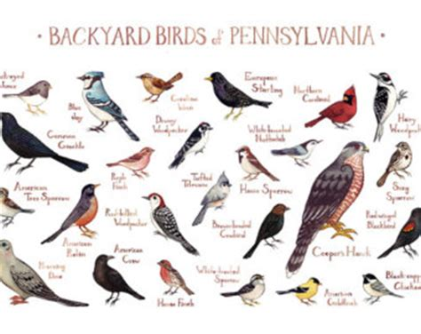 southern birds backyard guide backyard identification 28 images southern birds