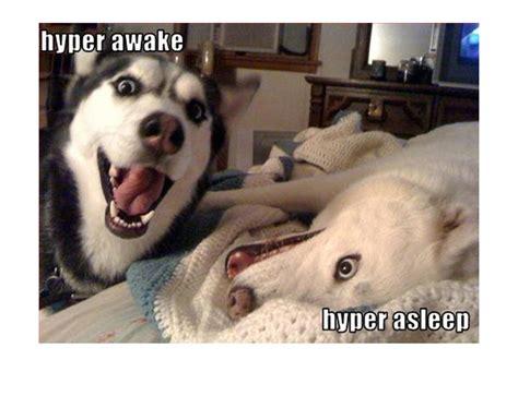 Dog Meme - 31 very funny dog memes graphics images photos picsmine