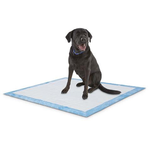 petco puppy pads animaze x large absorbent potty pads petco