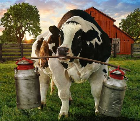 Fil A Calendars 17 Best Images About Chik Fil A Fast Food On
