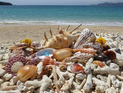 best beaches for seashells 16 best images about seashells and sea glass in okinawa
