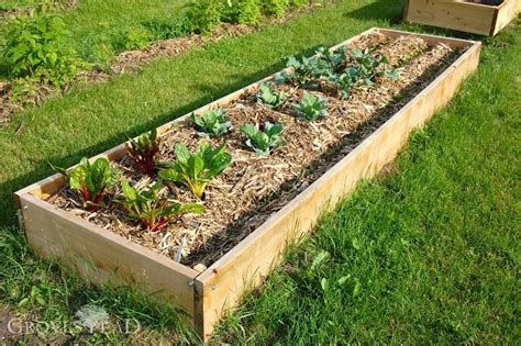 raised garden beds building raised bed gardens step by step the grovestead
