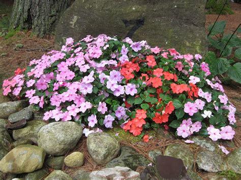fiori giardino fiori da giardino guida con le variet 224 vivono anche