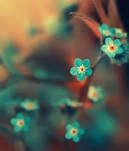 pretty blue colors beautiful color beauty belleza blue blue flowers