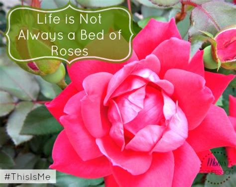 bed of roses life is not always a bed of roses