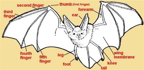 labelled diagram of a bat a to z stuff bat theme