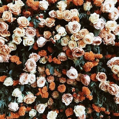 flower wallpaper aesthetic follow me on insta elle martinez earthy