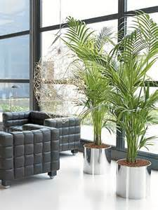 Decorate with potted plants home 60 examples as you
