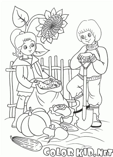 harvest coloring pages coloring page harvest vegetables