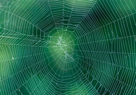 spider web pattern background spider web background