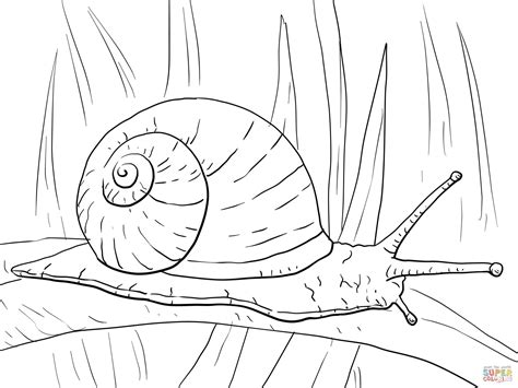 Garden Snail Coloring Page | garden snail coloring page free printable coloring pages