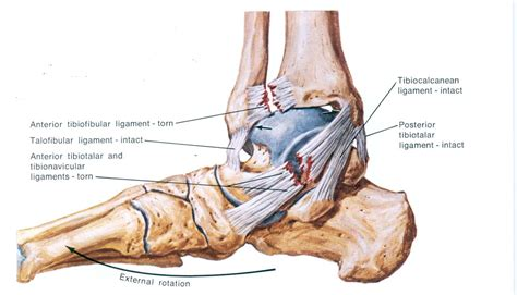 foot diagram ankle diagram diagram site