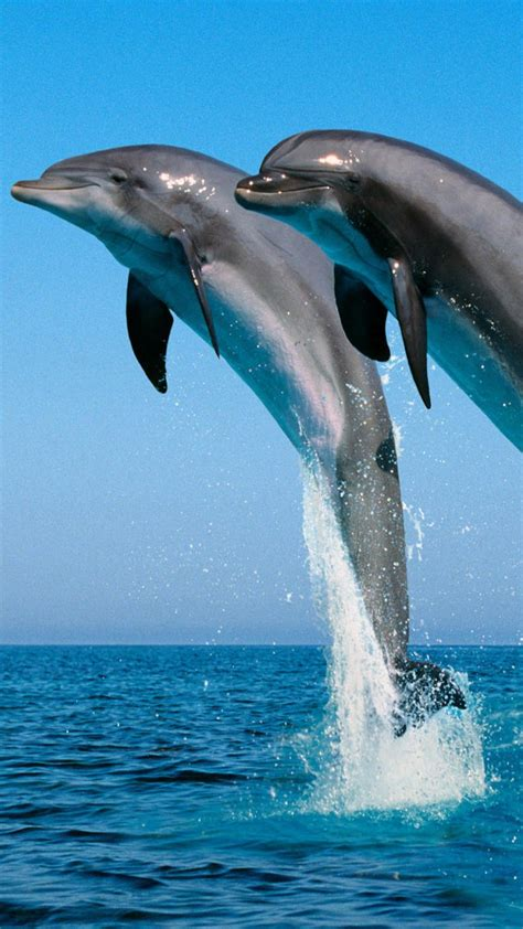 Sprei Sea Dolphine blue dolphins jumping wallpaper
