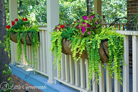Best Plants For Hanging Planters by Hometalk Best Plants For Hanging Baskets