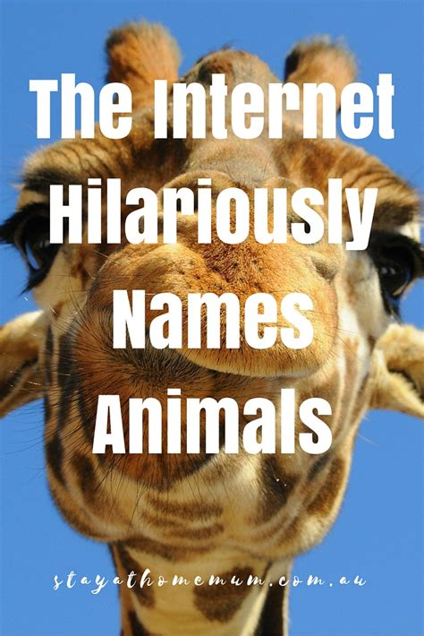 Internet Meme Names - beware of the danger noodle stay at home mum