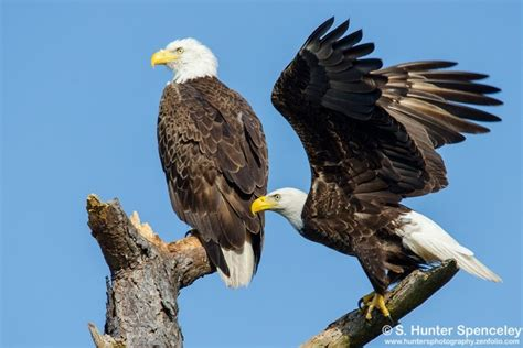 from our galleries 10 spectacular photos of bald eagle
