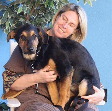 rottweiler rescue of los angeles westside german shepherd rescue of los angeles