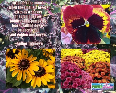Quotes On Gardens And Flowers Flower Garden Quotes Quotesgram