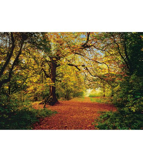 wall murals forest autumn forest large wall mural jo