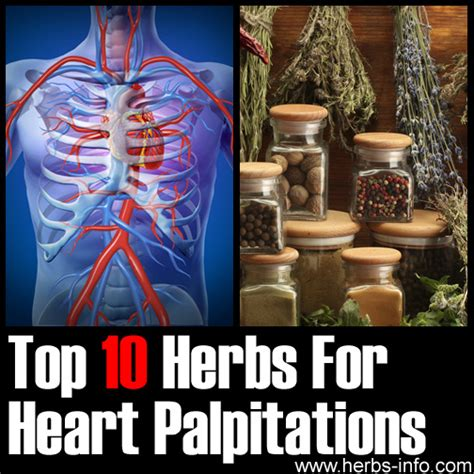 Can Detoxing Cause Palpitations by Herbs For Palpitations