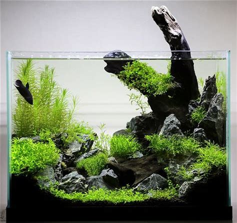 Led Aquarium Bandung best 25 betta aquarium ideas on betta tank betta fish tank and aquarium ideas