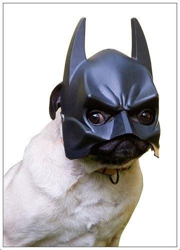 batman pug bat pug keep calm and dogs