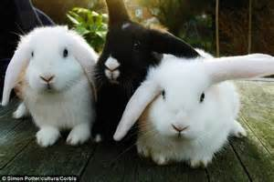 the rabbit the solution to our domesticated issues books rabbits may be stressed by hutch mates and a lack of