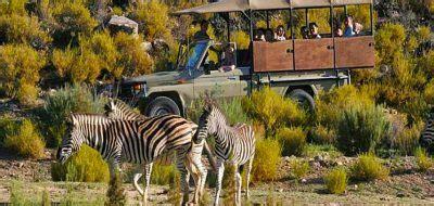 Aqilla Cape cape town day safari options cape town day tours trips explore