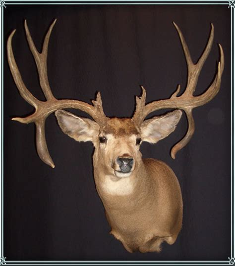 deer head deer heads and mounts for retail sale montana taxidermy