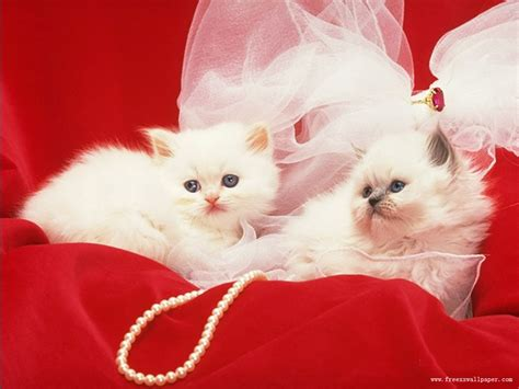 beautiful kittens beautiful cats images beautiful cool wallpapers