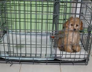 how to potty a puppy in an apartment puppy sale contract how do you potty a puppy in an apartment
