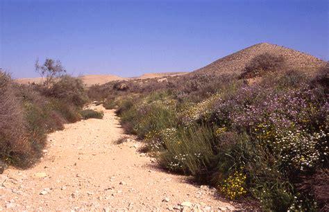 sustainable landscape architecture arid landscape design