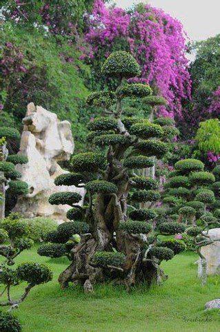 Beaux Jardins Privés by Seussian Topiaire Arbres Remarquables Arbres 233 Tranges