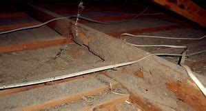 pest control termite inspections darwin nt pest weed