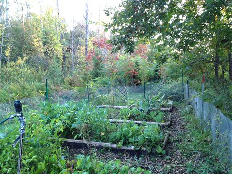 overgrown garden backyard organic veggie farm lessons learned in our