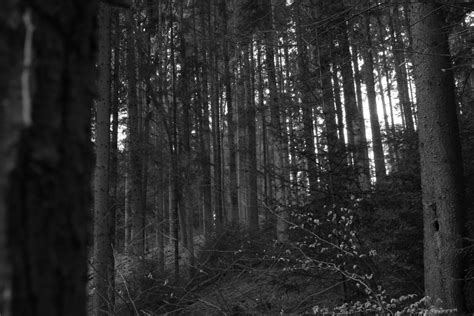 black forest andrewscotthines schwarzwald the black forest