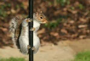 How To Repel Squirrels From Bird Feeders how to repel squirrels from bird feeders ehow