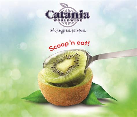 swing time catania catania looks to california kiwi harvest forecasts growth